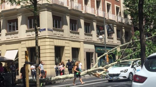 Telemadrid, Árbol, Viento, Coche, Accidente
